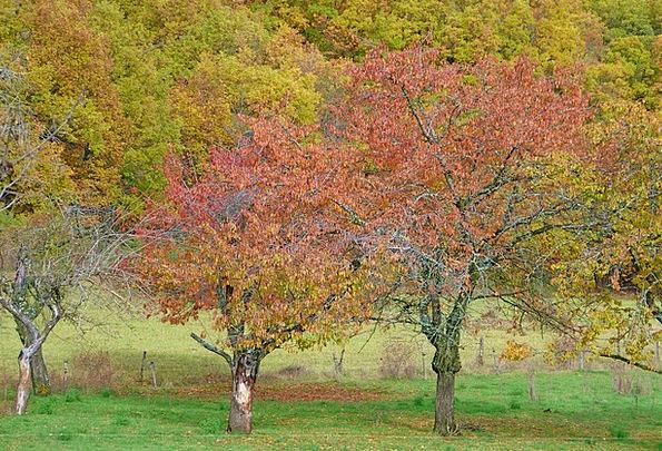 Autumn Landscape Landscapes Countryside Nature Tre