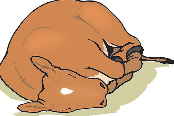 Baby Darling Asleep Farm Farmhouse Sleeping Animal