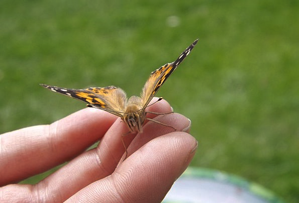 Butterfly Landscapes Pointer Nature Wings Annexes