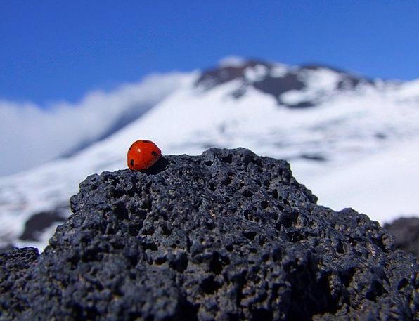 Ladybird Landscapes Nature Italy Etna White Mounta