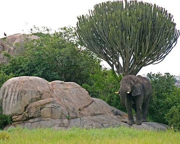 Serengeti Monster Candelabra Candleholders Elephan