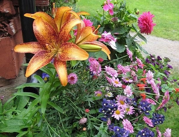 Flowers Plants Hue Colorful Interesting Color Bouq