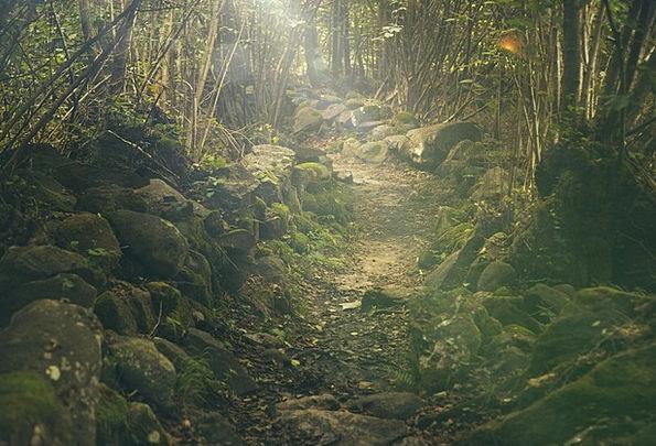 Forest Woodland Landscapes Trail Nature Mystical S