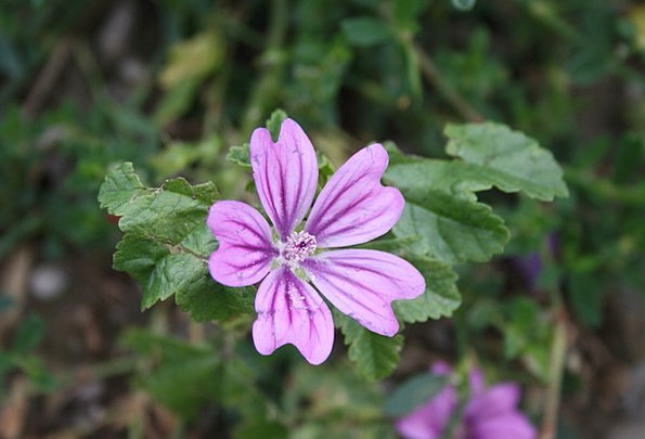 Wild Flower Landscapes Plants Nature Flower Floret