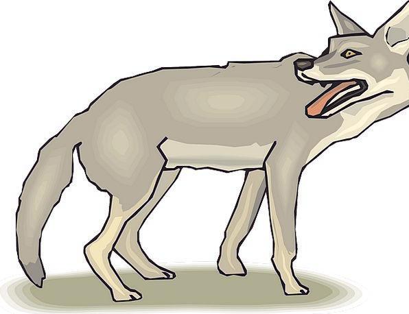 Animal Physical Gumshoe Tail End Shadow Tongue Lan