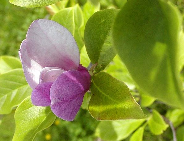 Flower Floret Permits Ornamental Decorative Ticket