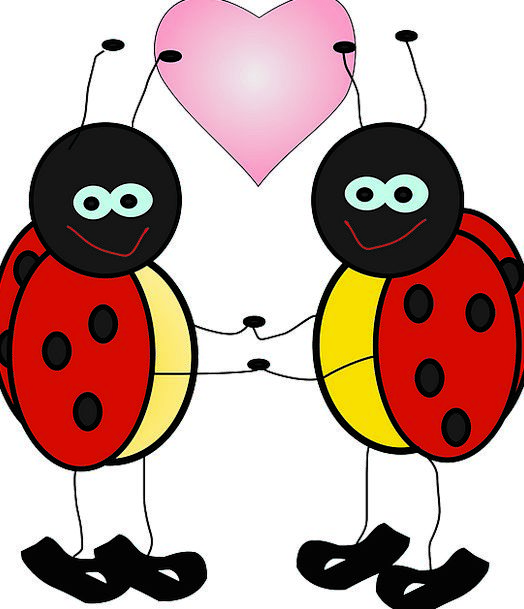 Ladybugs Bug Lady Woman Insect Summer Beetle Red H