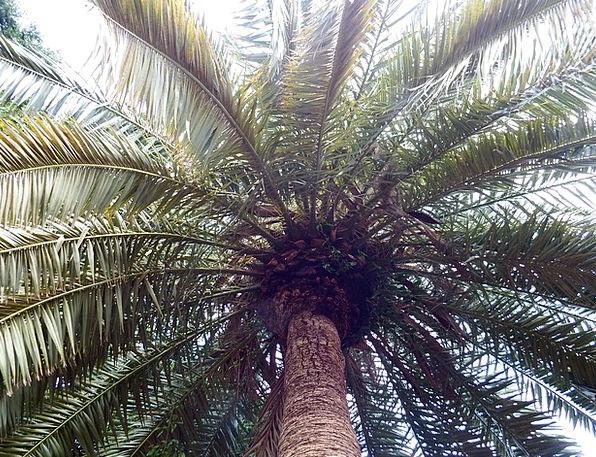 Palm Tribute Landscapes Vegetable Nature Subtropic