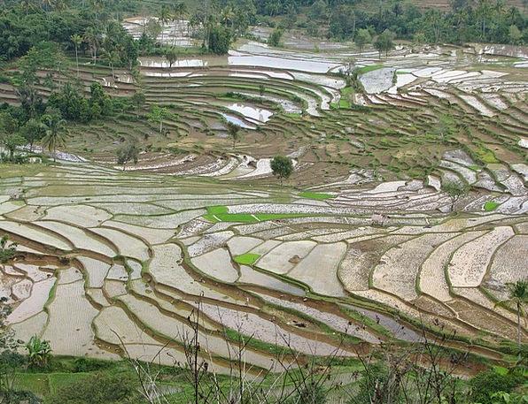 Rice Fields Landscapes Adjoining Nature Terrace Wa