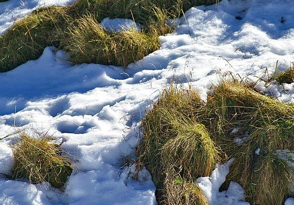 Grass Lawn Landscapes Nature Snow Snowflake Parche