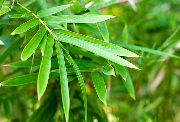 Singapore Botanical Garden Plot Botanic Plants Flo