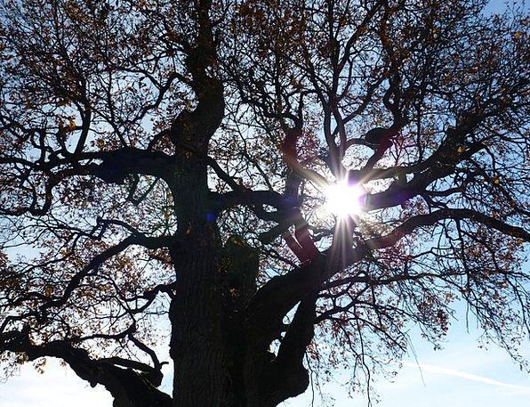 Tree Sapling Landscapes Nature Back Light Tailligh