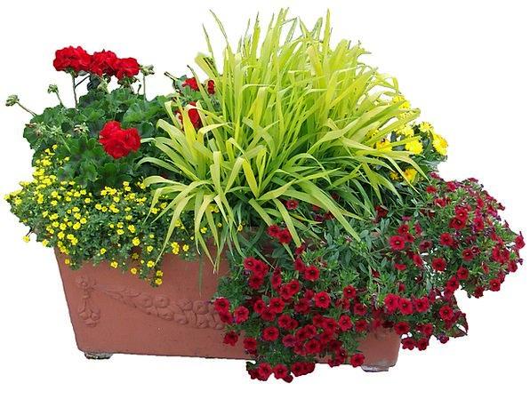 Flowers Trough Plants Planting Establishing Flower