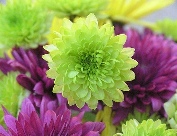 Flowers Plants Elaborate Green Lime Purple Decorat