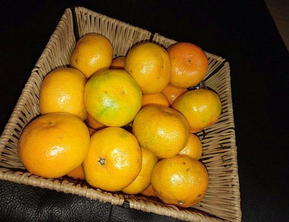 Tangerine Citrus Joe Saenggyul