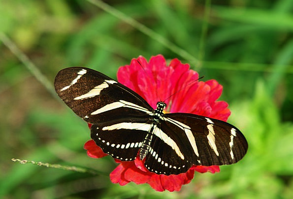 Butterfly Landscapes Nature Nature Countryside Zin