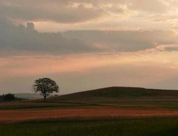 Tree Sapling Vacation Travel Sunset Sundown Abends