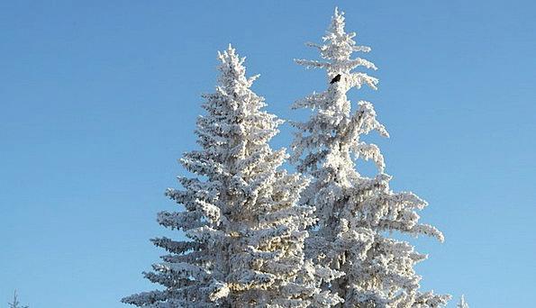 Tree Sapling Emotionless Winter Cold Snow Snowflak