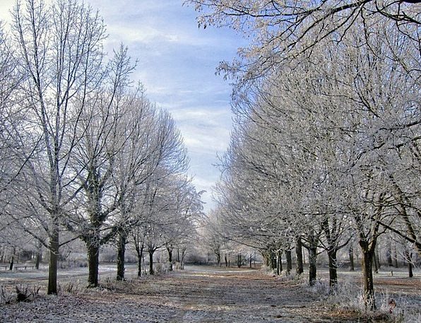 Winter Season Plants Ice Trees Hdr Snow Snowflake