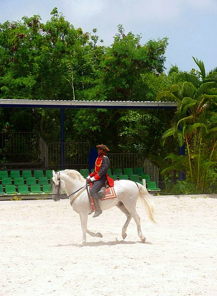Horse Mount Demonstration Riding Equestrian Show M