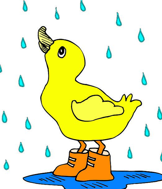 Baby Darling Fowl Duck Stoop Bird Rain Volley Boot