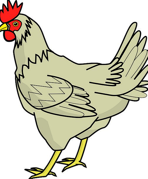 Chicken Cowardly Hen Poultry Livestock Barn Outbui
