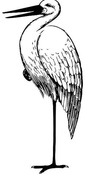 Stork Wading Bird White Stork Tall Bird Large Bird