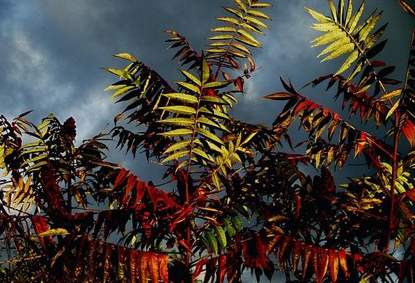 Staghorn Landscapes Sapling Nature Leaf Foliage Tr
