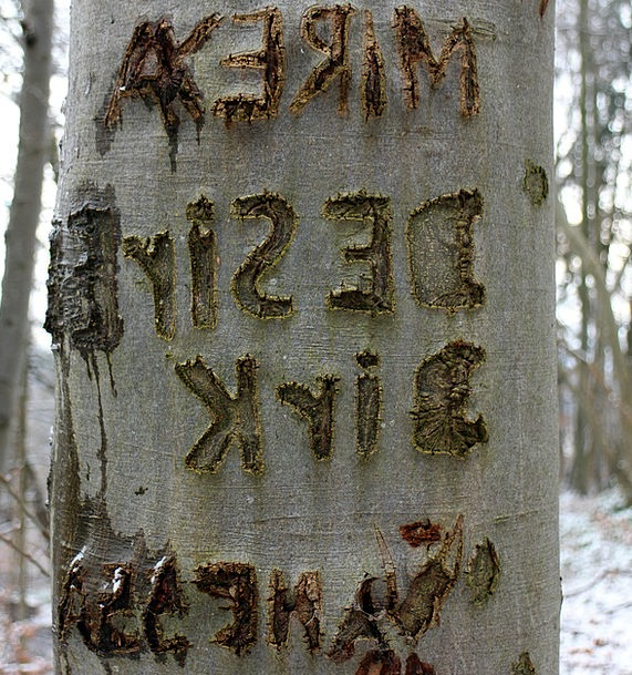 Tree Sapling Imprinted Name Designation Carved Mem