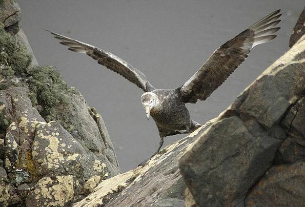Albatross Millstone Landscapes Darling Nature Lear