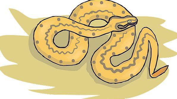 Snake Serpent Shingle Desert Reward Sand Reptile F