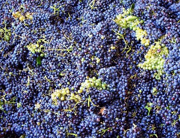Vintage Out-of-date Drink Food Grape Harvest Grape