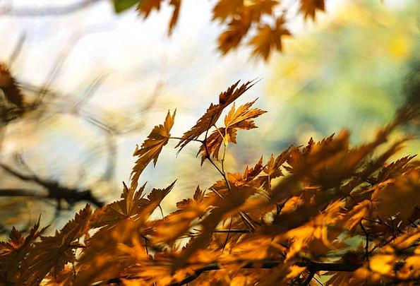 Autumn Fall Greeneries Autumn Leaves Leaves Light