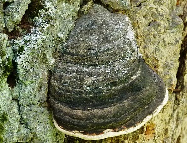 Fungus Landscapes Burgeon Nature Fungi Mushrooms M