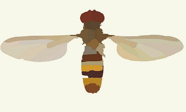 Parasitic Wasp Insect Bug Wasp Sting Bite Fly Para