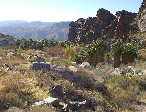 Palm Canyon Landscapes Countryside Nature Palm Tre