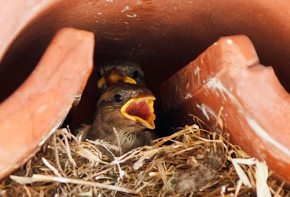 Sparrow Physical Animals Faunae Animal Little Baby