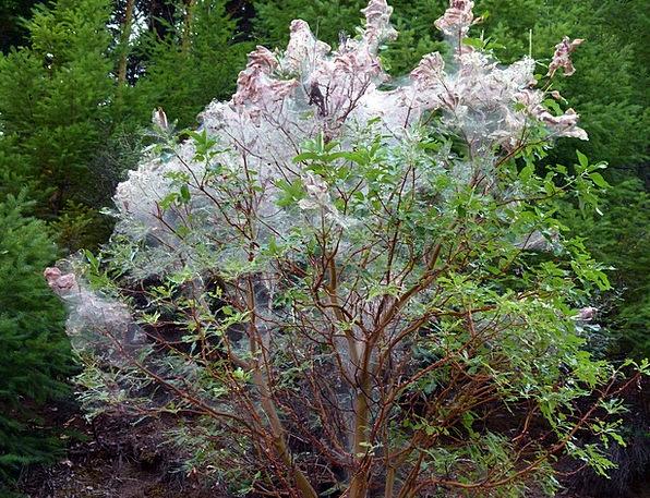 Spiderweb Landscapes Enclosed Nature Tree Sapling