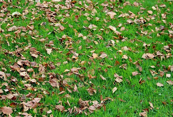 Leaves Greeneries Field Autumn Mood Meadow October