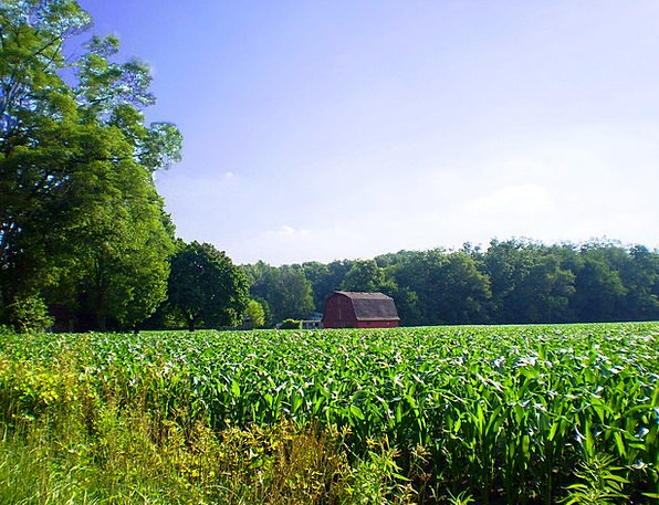 Farm Farmhouse Landscapes Country Nature Cornfield