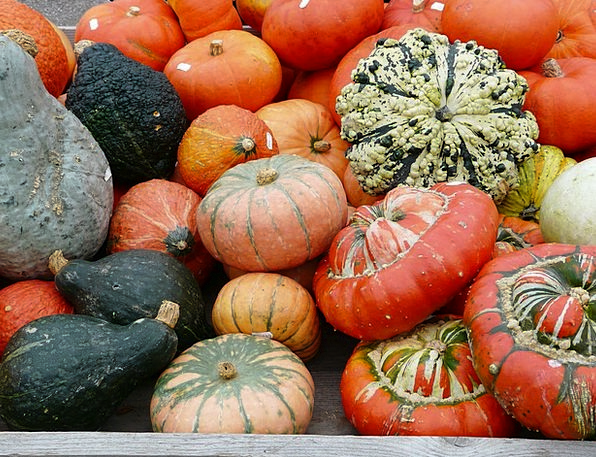Pumpkins Pumpkin Species Kuebismarkt Different Dis
