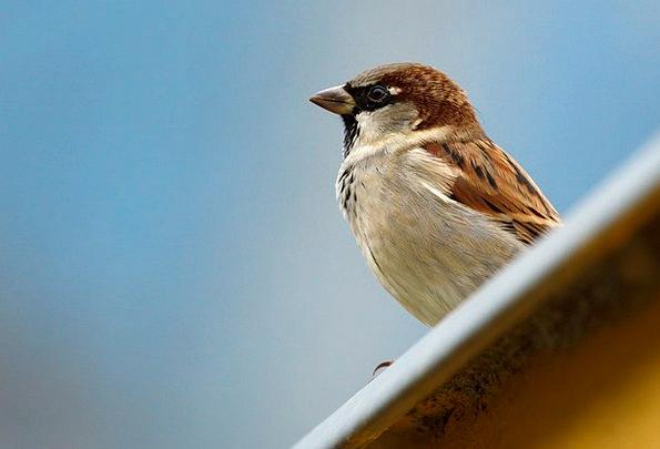 Animal Physical Fowl Brown Chocolate Bird Sparrow