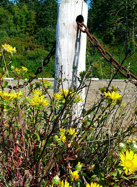 Wildflowers Weeds Landscapes Cable Nature Nature C