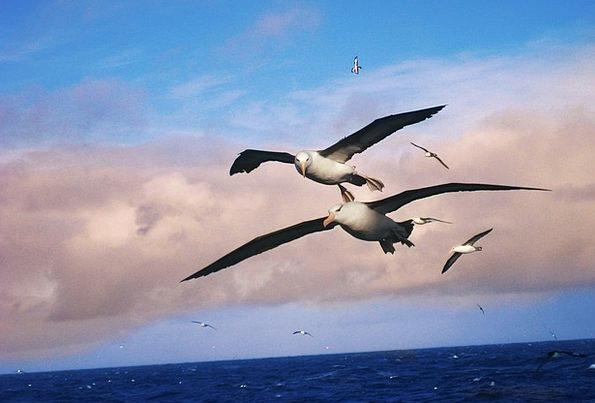 Albatros Landscapes Natures Nature Aquatic Water B