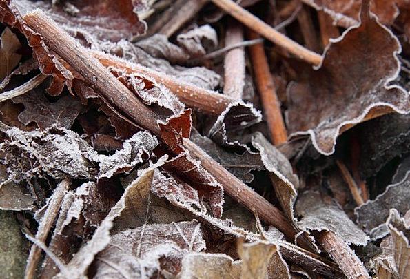Autumn Landscapes Detail Nature Cold Emotionless C