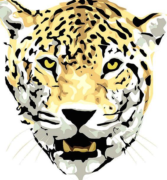 Jaguar Animal Physical Leopard Wildlife Jungle Rai