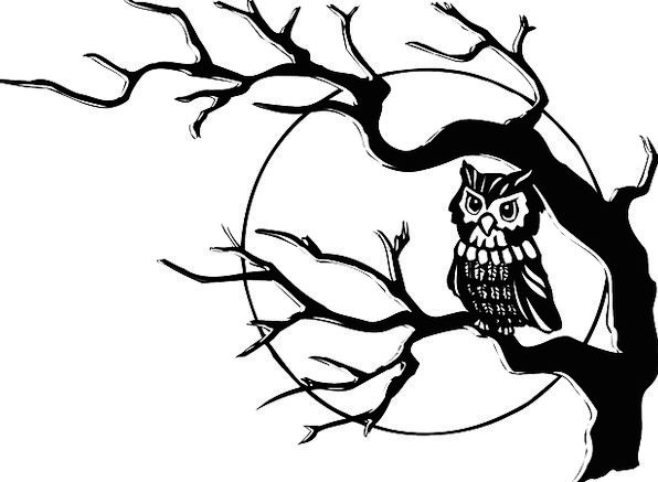 Owl Bird Of Prey Nocturnal Bird Hoot Beep Night Pe