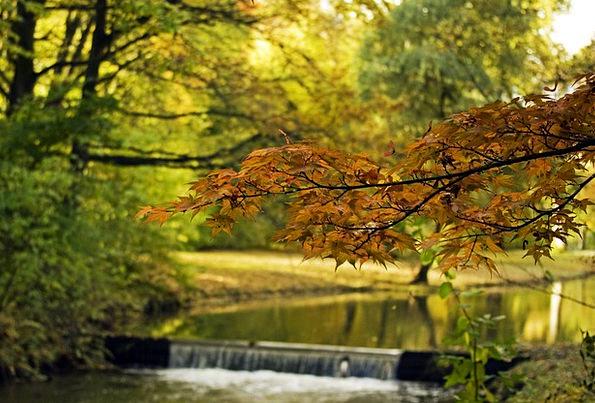 Water Aquatic Fall Foliage Greenery Autumn Torrent