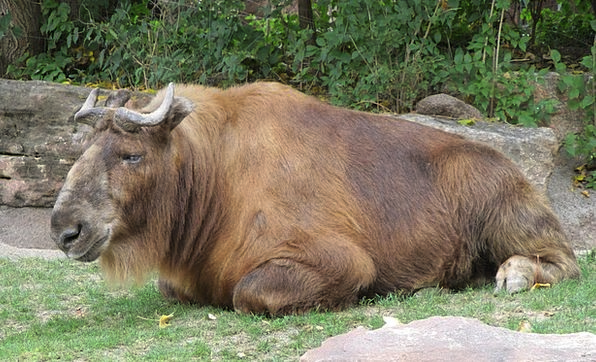 Gnu Landscapes Nature Antelope Wildebeest Ox Ungul