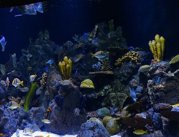 Reef Ridge Island Sponges Loofas Coral Reef Aquari